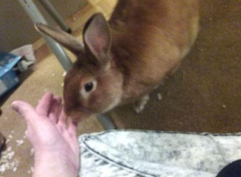 bunny lap 2