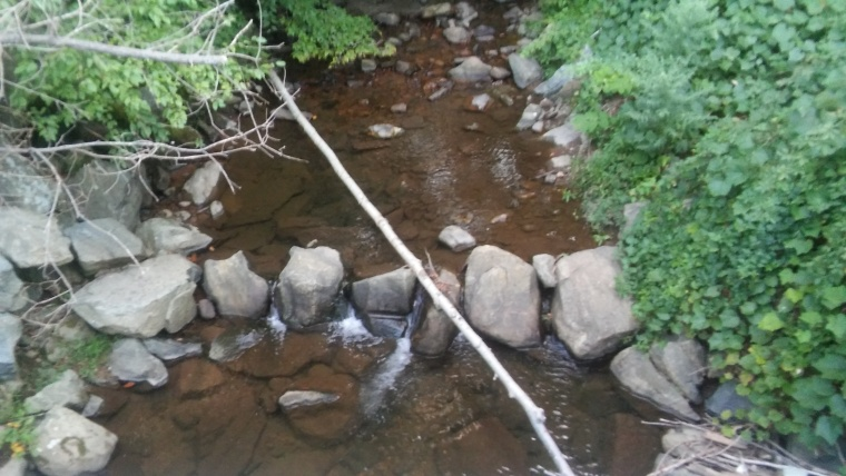 brook fallen tree