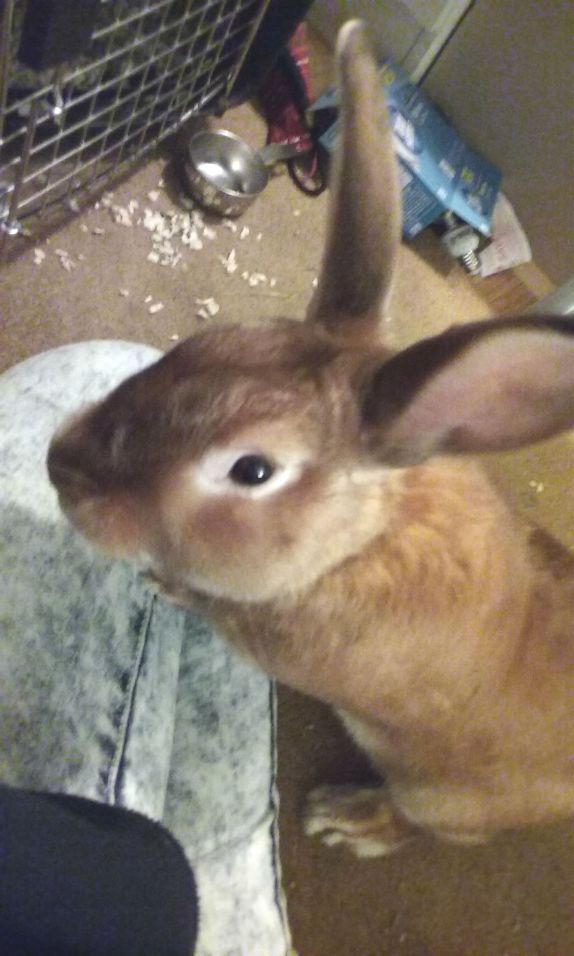 bunny in my lap