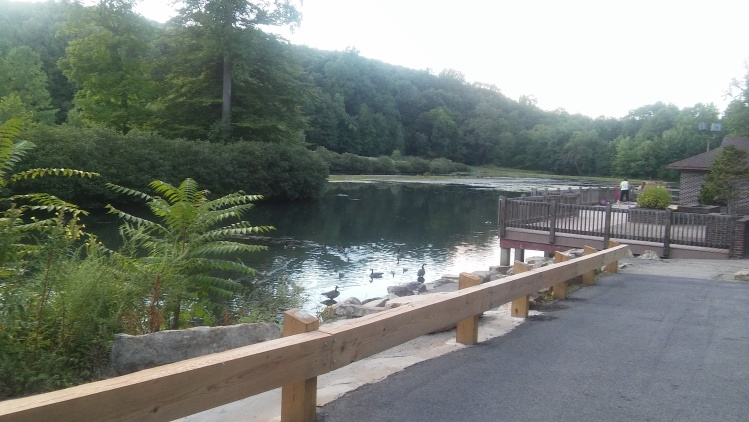 park trees lake rockss
