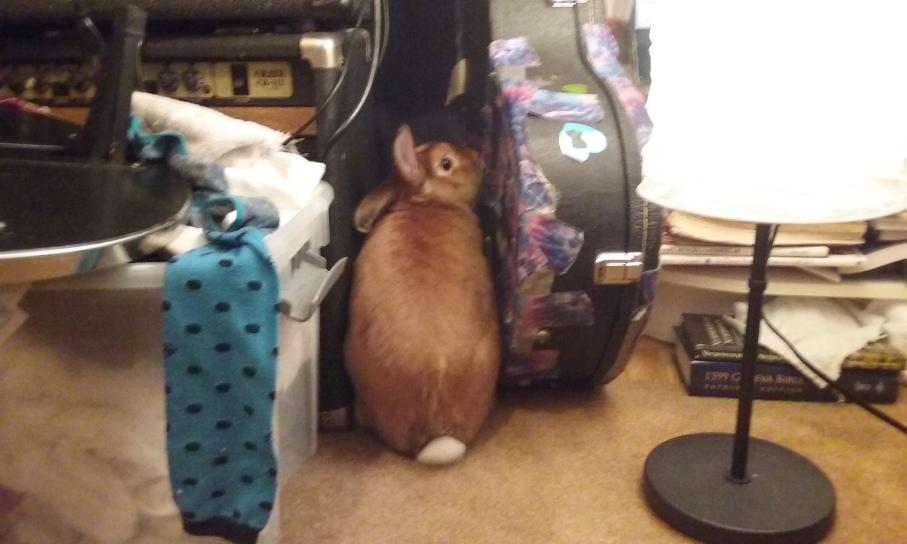 bunny butt 2