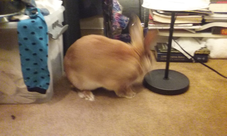 bunny butt moving