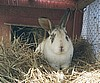 bunny_in_cage