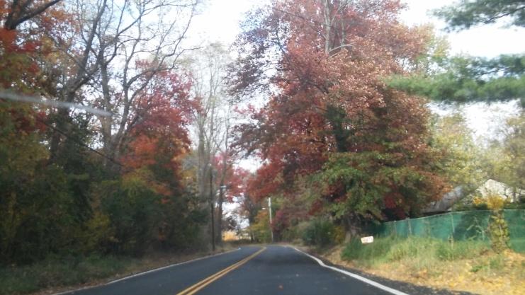 fall trees drive