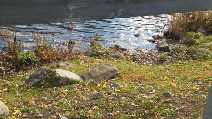 wharton lake edge