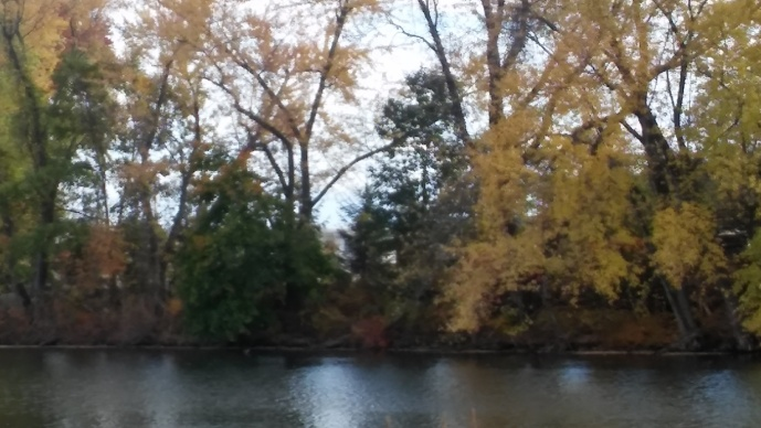 wharton lake yellow trees
