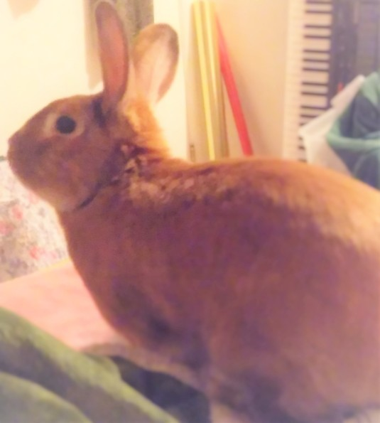 bunny edited