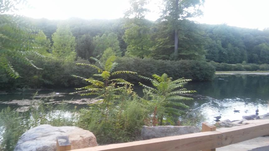 park trees lake rocks