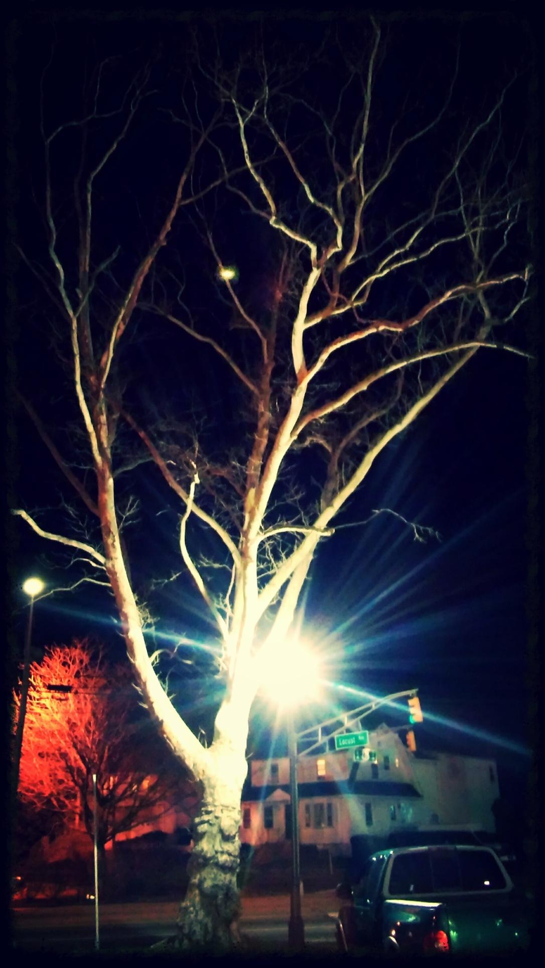 tree edited 3