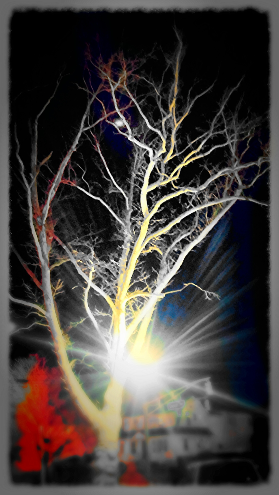tree negative effect