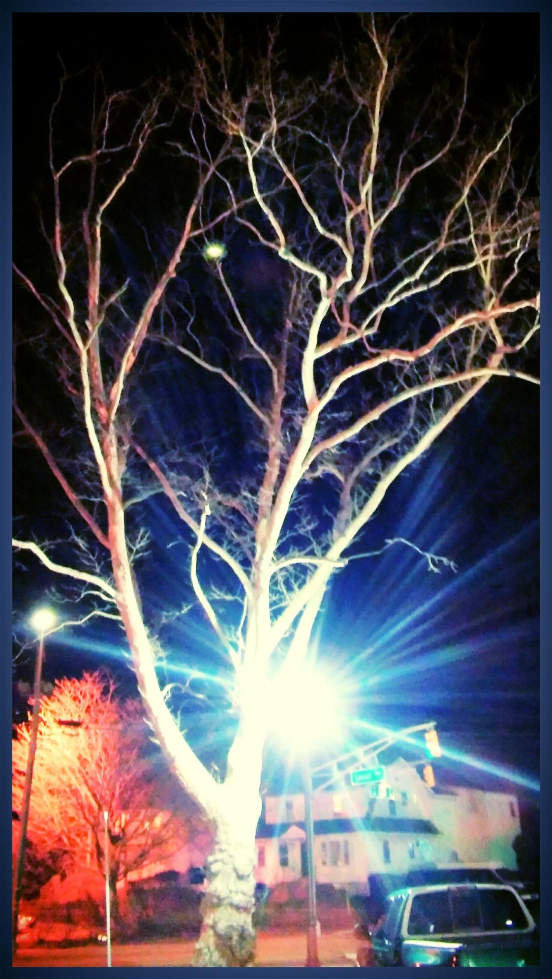 tree edited